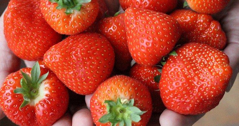 Ze zijn er weer volop: Hollandse aardbeien!